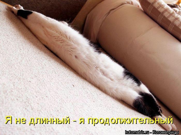 kotomatritsa_3Q (700x525, 152Kb)