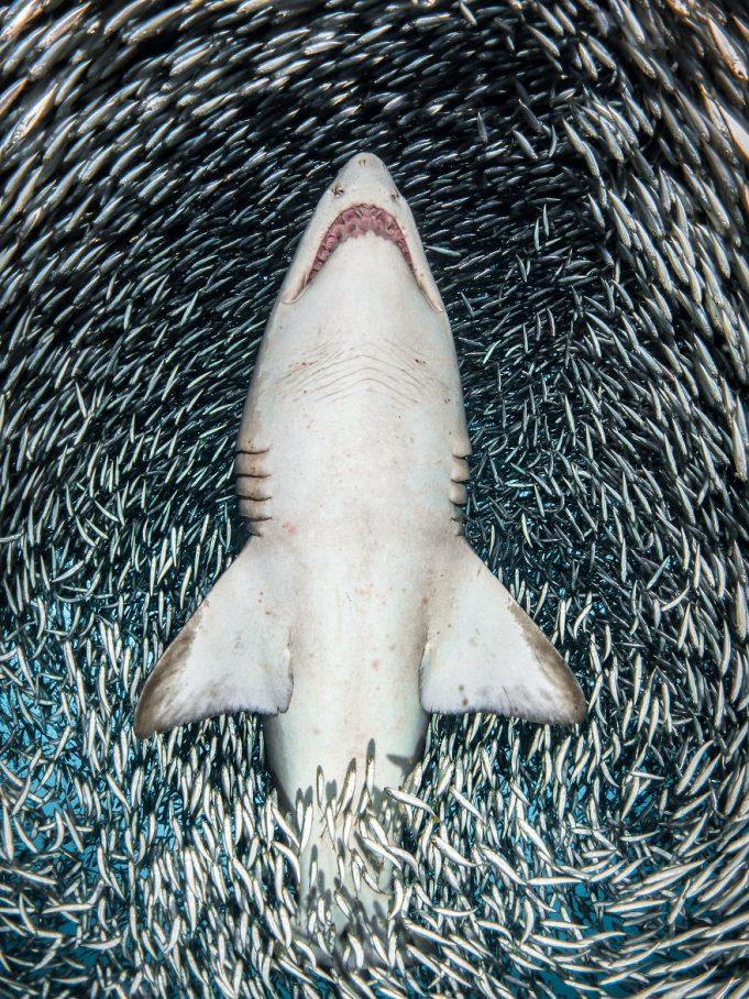 Победители конкурса «Лучший подводный фотограф 2018 года»
