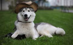 ТЕРЕМОК. В каком возрасте нельзя заводить собаку?
