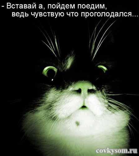 Забавные котоматрицы для хор…