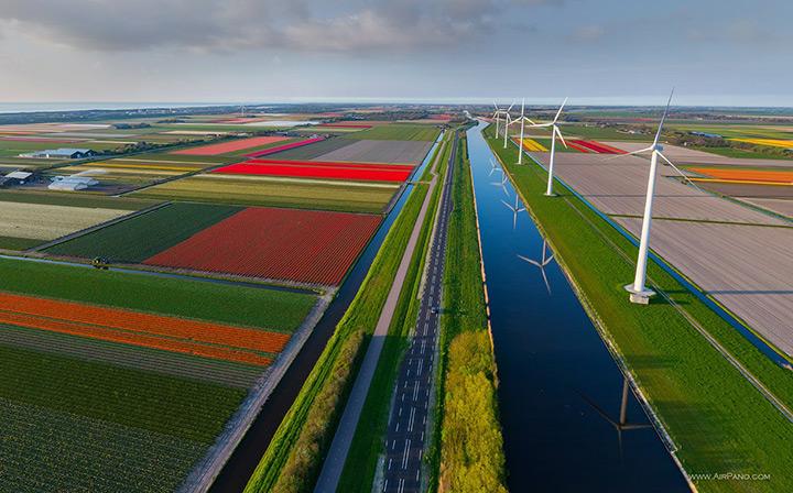 Поля тюльпанов и ветряные мельницы в Голландии