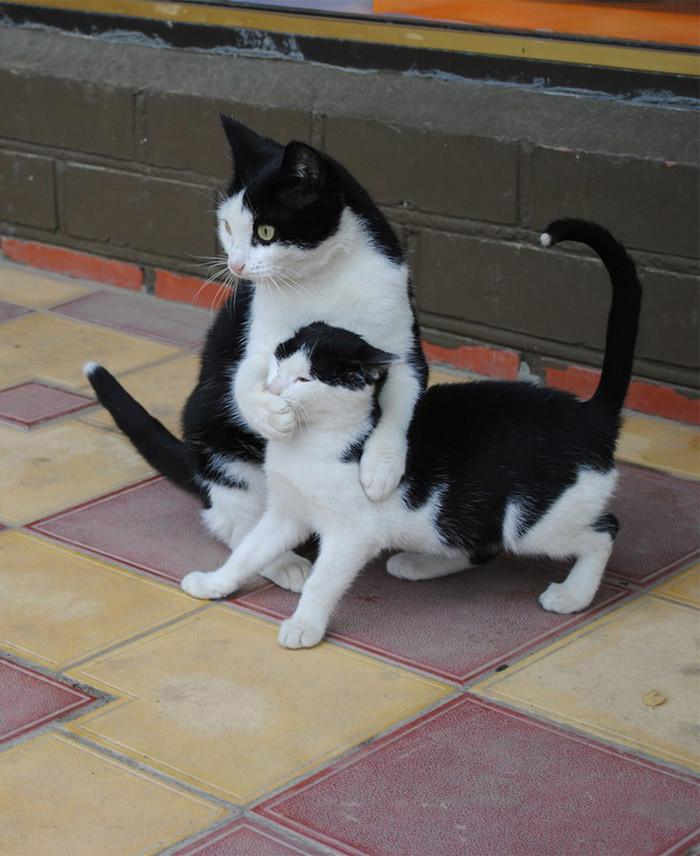 10. Помолчи, деточка котенок, кошка
