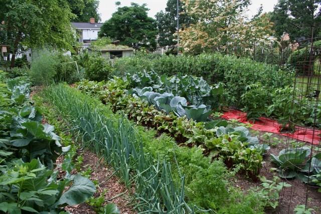 Очередная подборка: советы и хитрости дачников-огородников