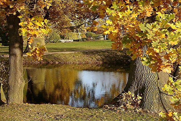 Листопад прибавляет работы хозяину пруда и газона