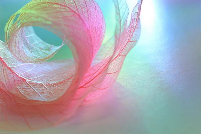 Чудеса макросъёмки Shihya Kowatari