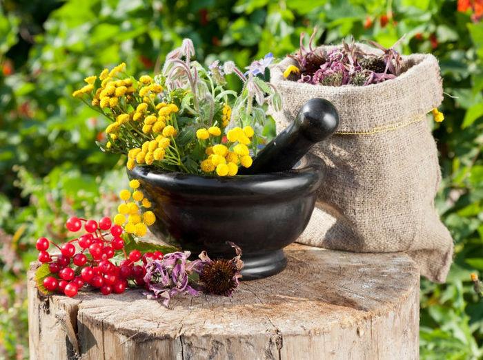 Уникальные советы сибирской травницы — правильное питание