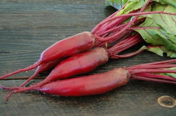 Корнеплоды-сосульки - 5 выгодных свойств