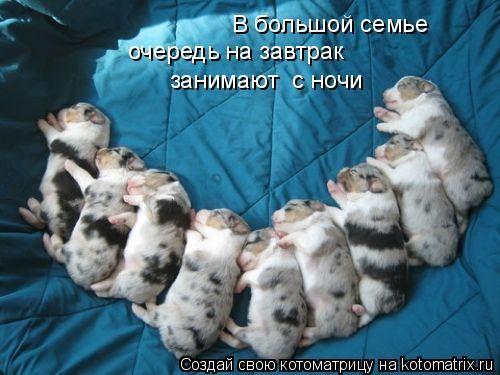 Пёсематрицы (не менее великолепные, чем с котами )