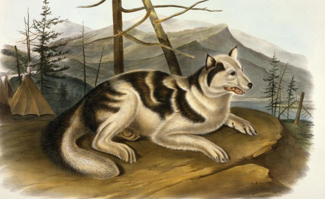 Верный друг: исчезнувшие собачьи породы
