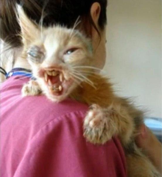 Этот крошечный котенок в таком ужасном состоянии был обнаружен 7-летней девочкой на мусорке