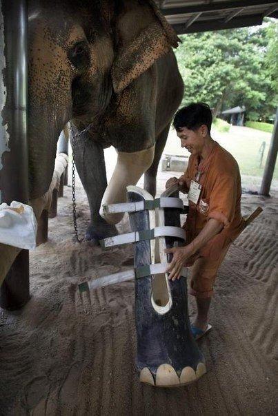 Вот так помогают слоникам