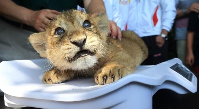 12 животных, которые не смогли скрыть своих эмоций