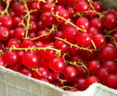 Варенье из красной смородины на зиму. Рецепты заготовок
