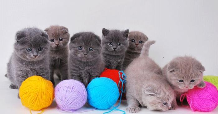 Котиков никогда не бывает много!