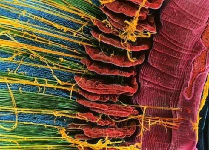 Фото человеческих органов по…