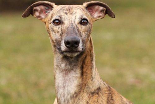 ТОП-25: Самые маленькие породы собак