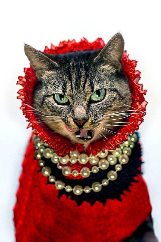 Богатые коты и кошки от кутюр