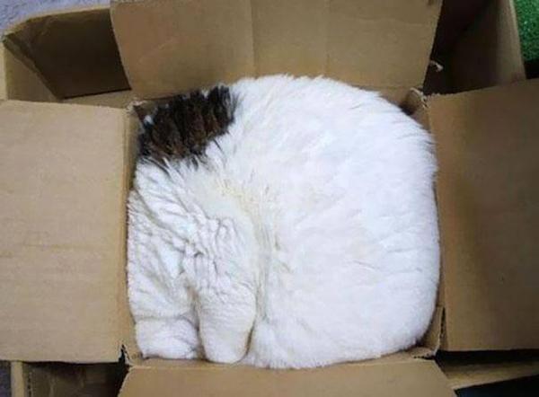 15 фотографий котов, которым всё равно, где спать