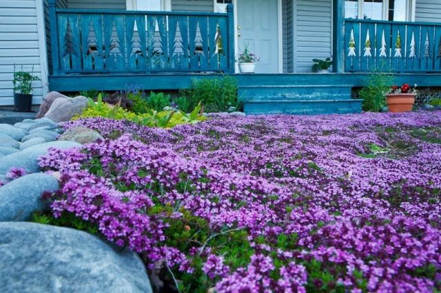 Цветы и растения для сада с названием 9