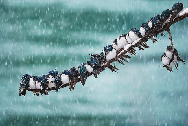 20 животных, которые готовы к зиме животные, к зиме готов