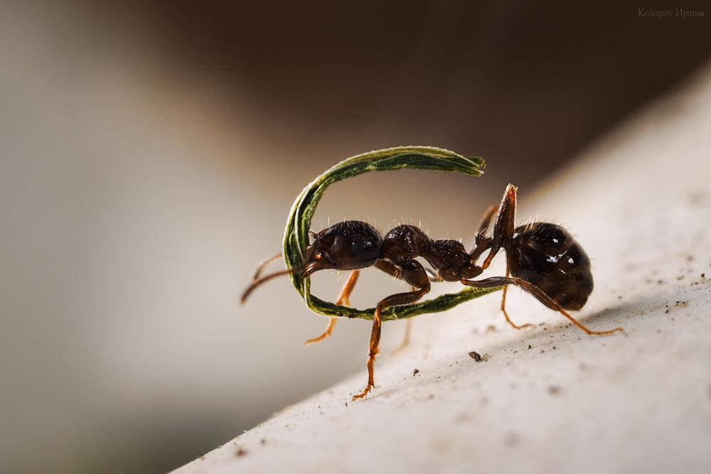 Муха и муравьи:  удивительная история )