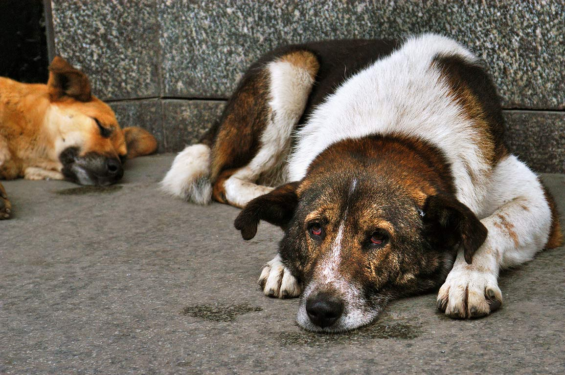 """Во Львове (Украина) собак """"накачиваются"""" алкоголем и используют для попрошайничества"""
