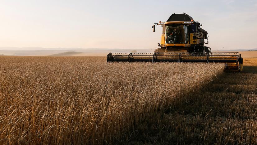 В США увидели угрозу в связи с рекордным урожаем пшеницы в России