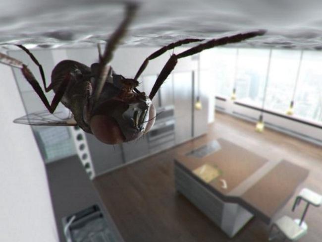 муха в комнате