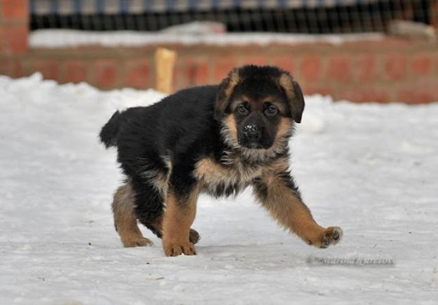 От щенка до взрослой собаки за 40 секунд!