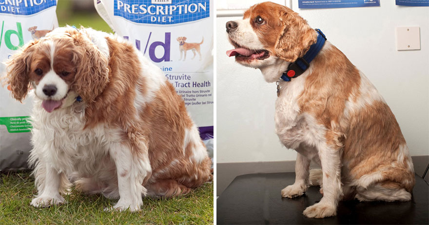 fat-animals-lose-weight-obesity-pet-fit-club-pdsa-uk-23