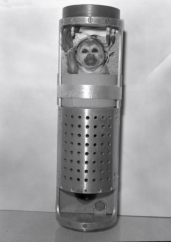 animalspace04 565x800 История покорения космоса животными