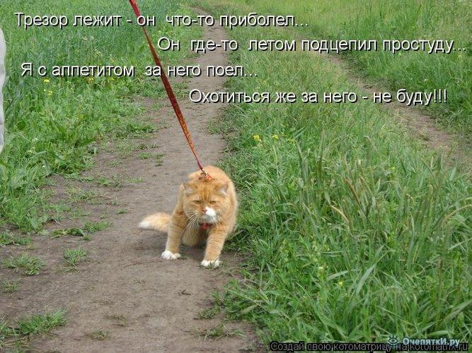 Юморная котоматрица 24