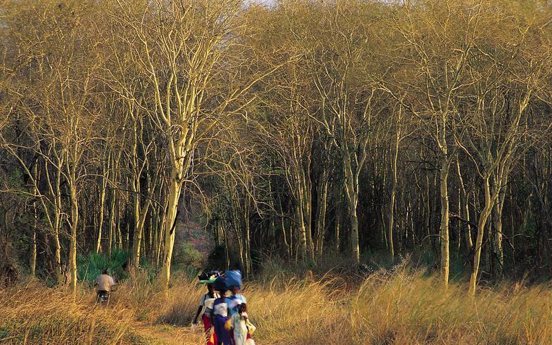 Трансграничный парк Лимпопо интересное, мир, национальный парк