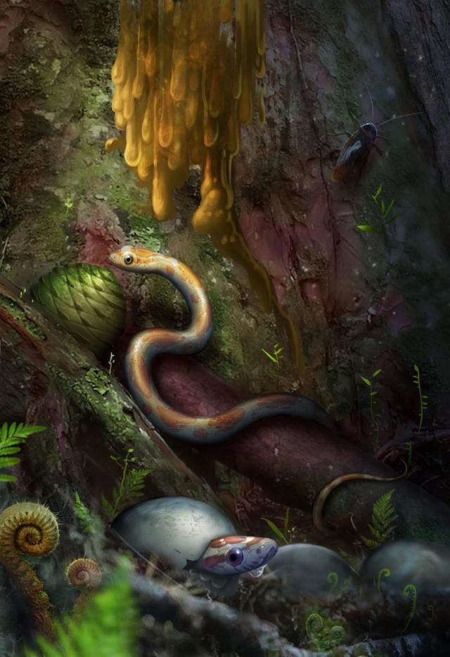 В янтаре нашли древнюю змею