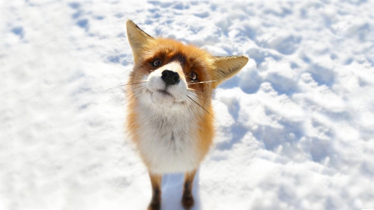 Почему фото милых животных сделает вас счастливее?