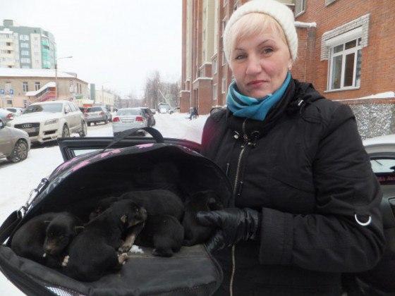 Зоозащитница в Бердске спасла от голода и холода собаку и 8 щенков