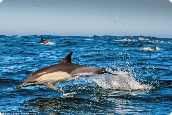 Дельфины и ежи испытвают сексуальное удовлетворение