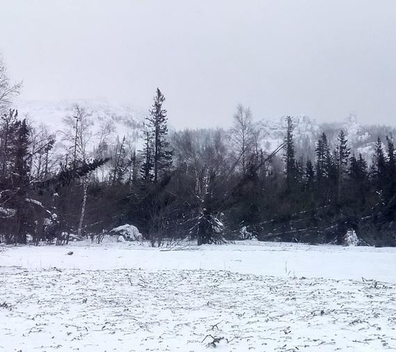 На Таганае в Златоусте неведомой рукой выкосило километры леса