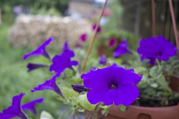 Экскурсия по еще одному саду и огороду:  в гости  к Татьяне
