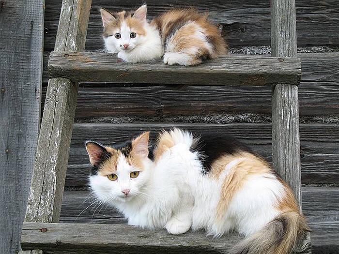 14. котенок, кошка