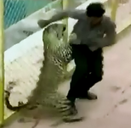 Леопардовая паника