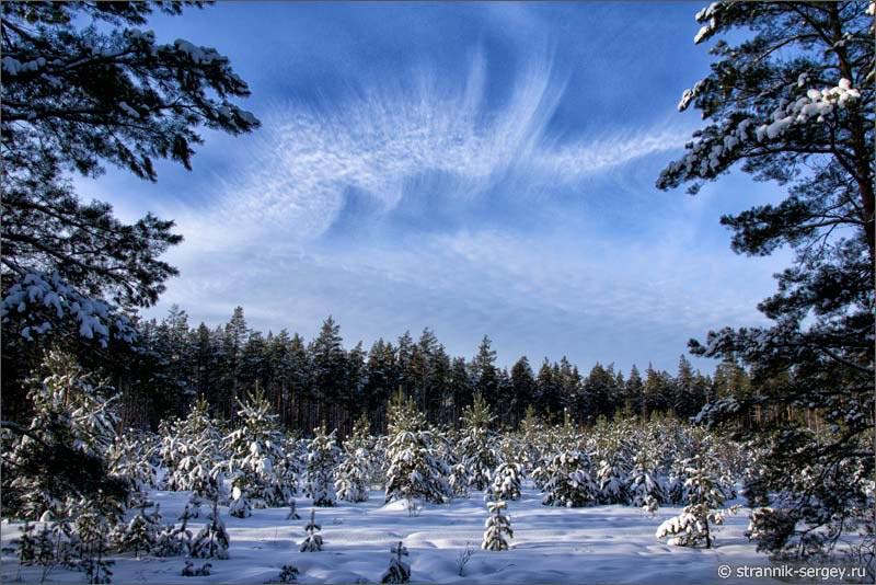 В мире загадочных лесов