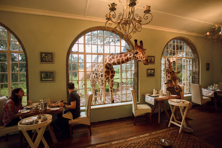 Завтрак с жирафом