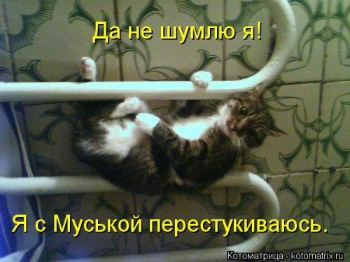 Свежая котоматрица для хорошего настроения (31 фото)