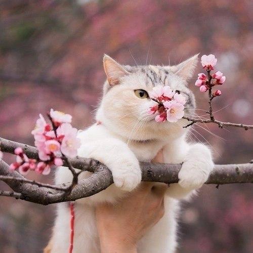 Кошка сделана из меха…