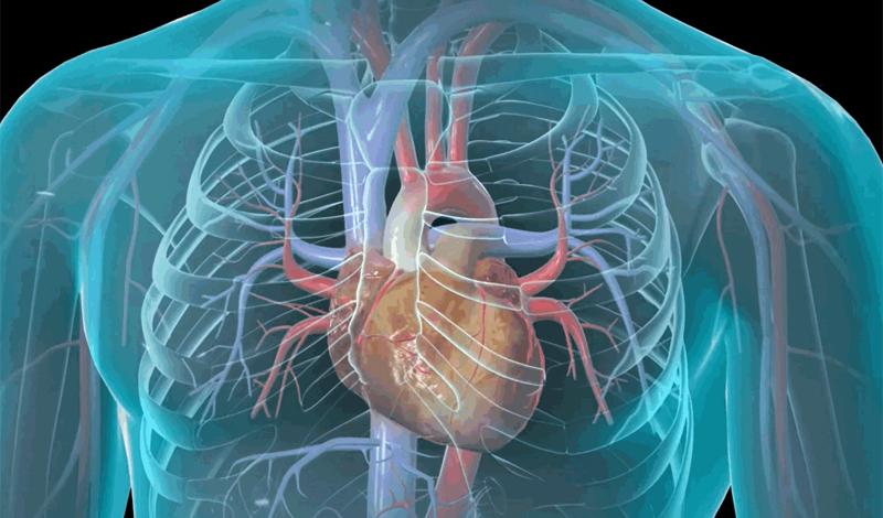 Что происходит с человеком при сердечном приступе и как от него спастись