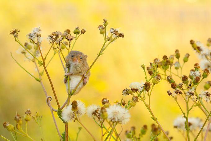 Фото милых мышат животные, красивые, мыши, факты
