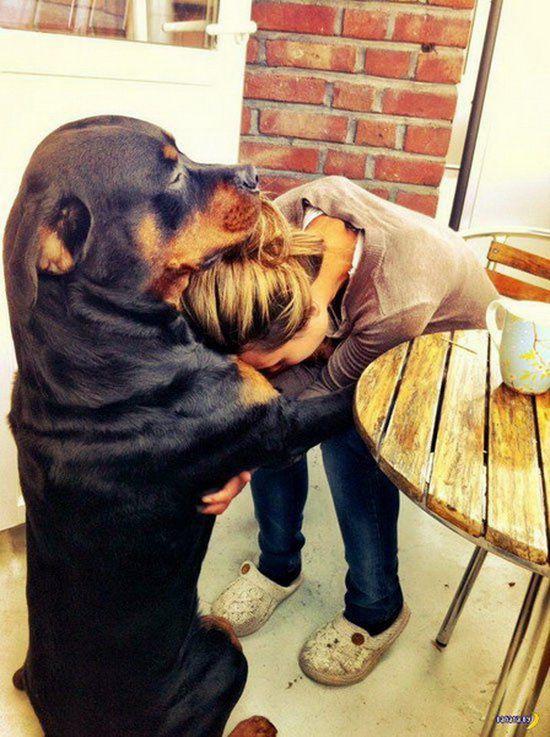 животные, собаки