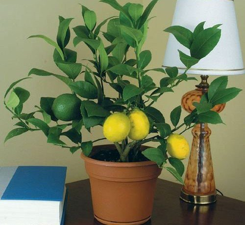 Польза комнатных растений.