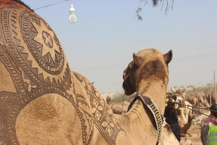 Гламурные верблюды: мастера выстригают животным потрясающие орнаменты при помощи обычных ножниц